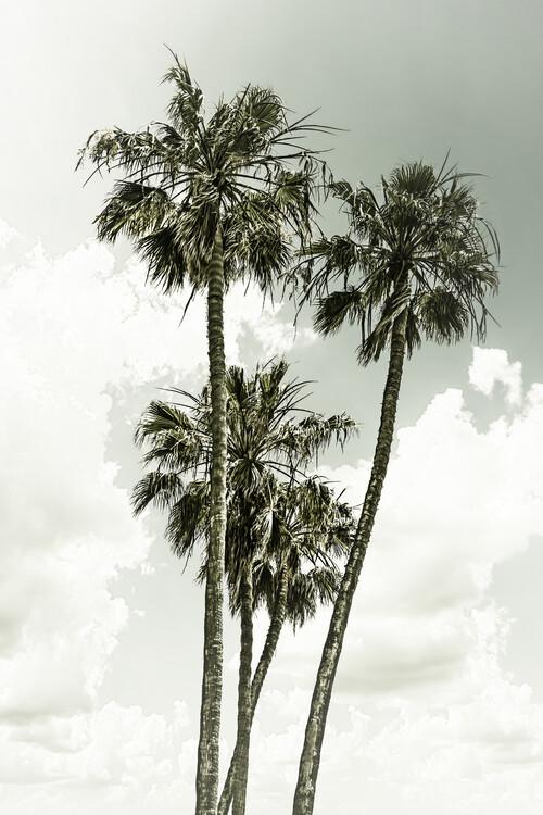 Cuadros en Lienzo Vintage palm trees summertime
