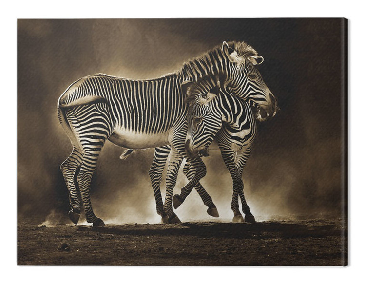 Pinturas sobre lienzo  Marina Cano - Zebra Grevys