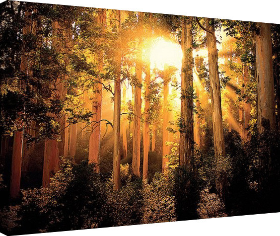 Pinturas sobre lienzo Mario Moreno - Enchanted