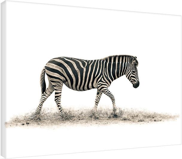 Cuadros en Lienzo Mario Moreno - The Zebra