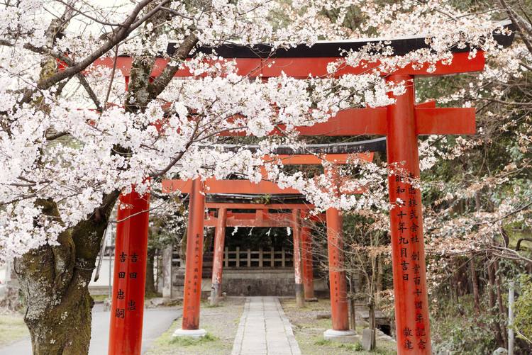 Cuadros en Lienzo Yoshida Shrine Torii