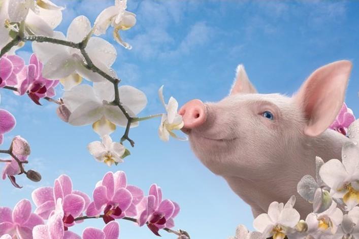 Plagát Blossom pretty - in pink