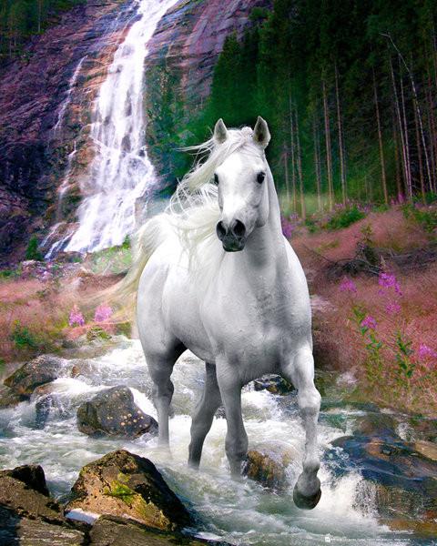 Plagát Bob Langrish - waterfall