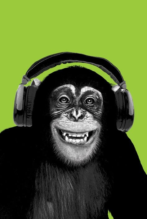 Plagát Chimpanzee headphones