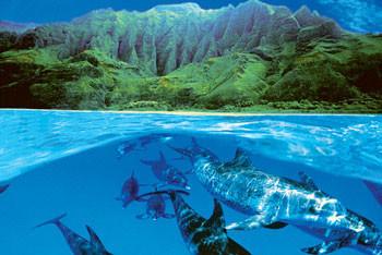 Plagát Dolphin island