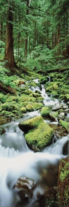 Plagát Forest waterfall