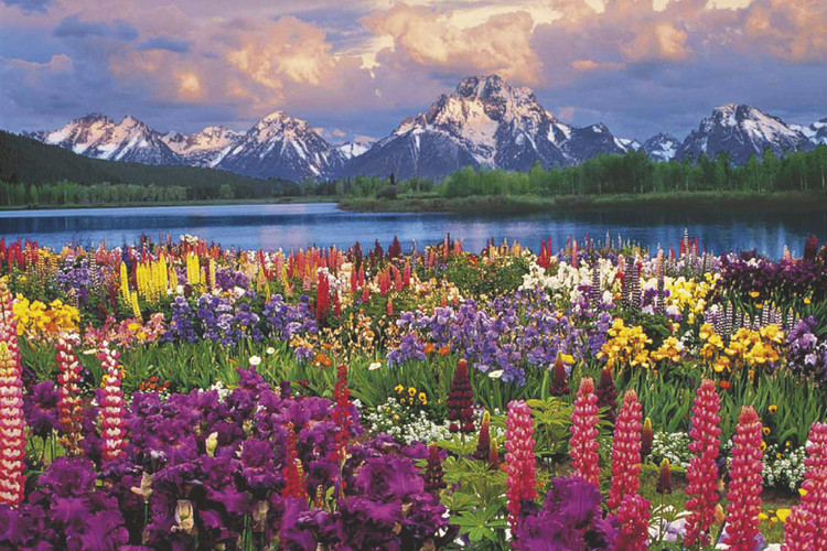 Plagát Grand Teton