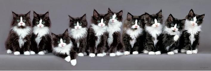 Plagát  Keith Kimberlin - 10 norských mačiatok