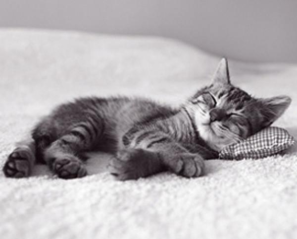 Plagát Mačiatko - spánok