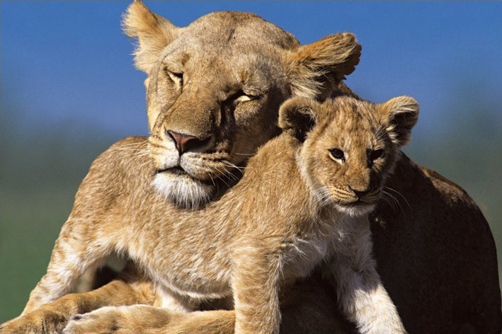 Plagát Mother and cub