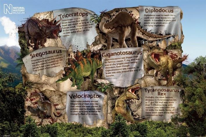 Plagát Natural history museum - dinosaur facts