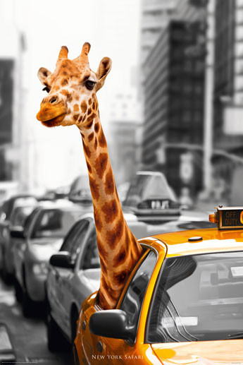 Plagát New York - safari