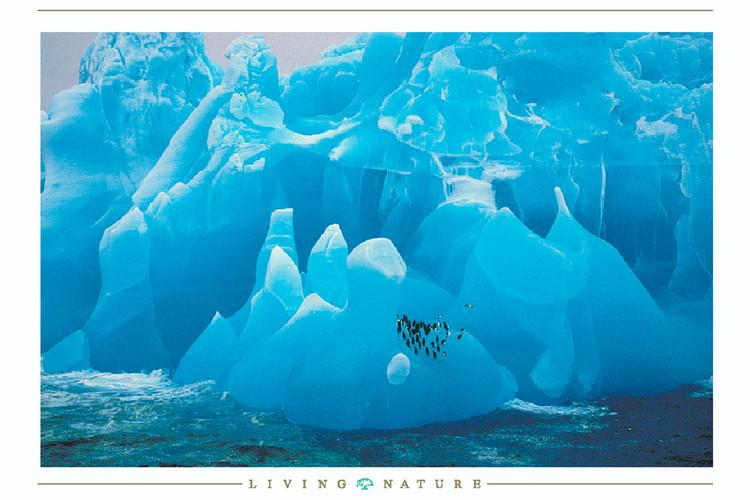 Plagát Penguis on iceberg