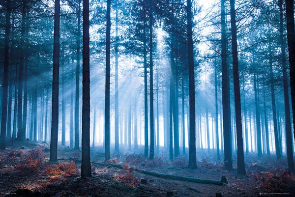Plagát Tom Mackie - forest