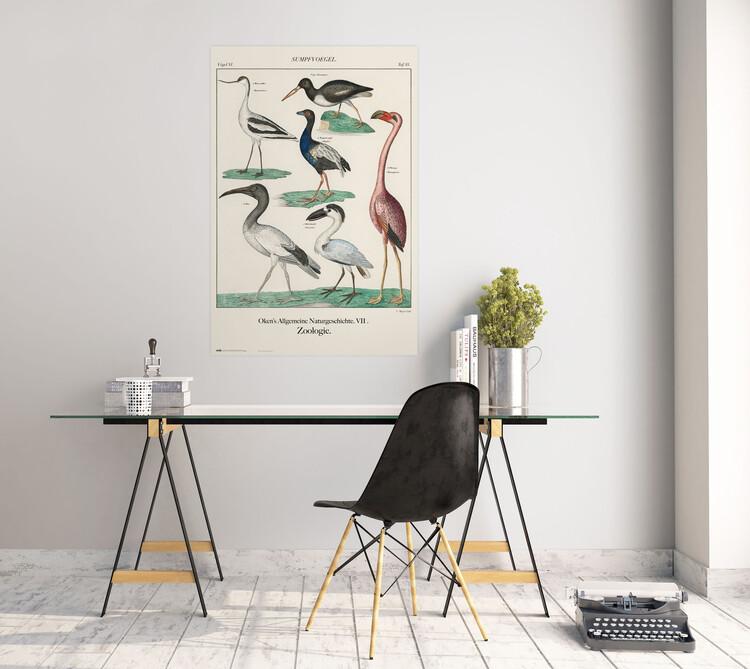 Plagát Vintage Birds
