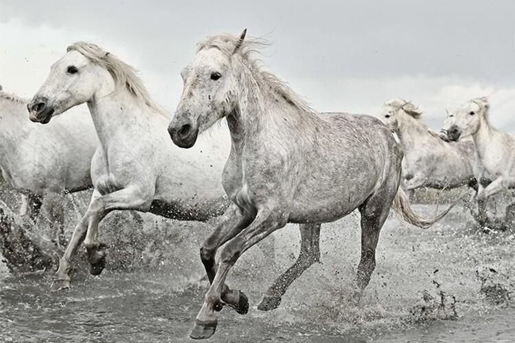 Plagát White Horses