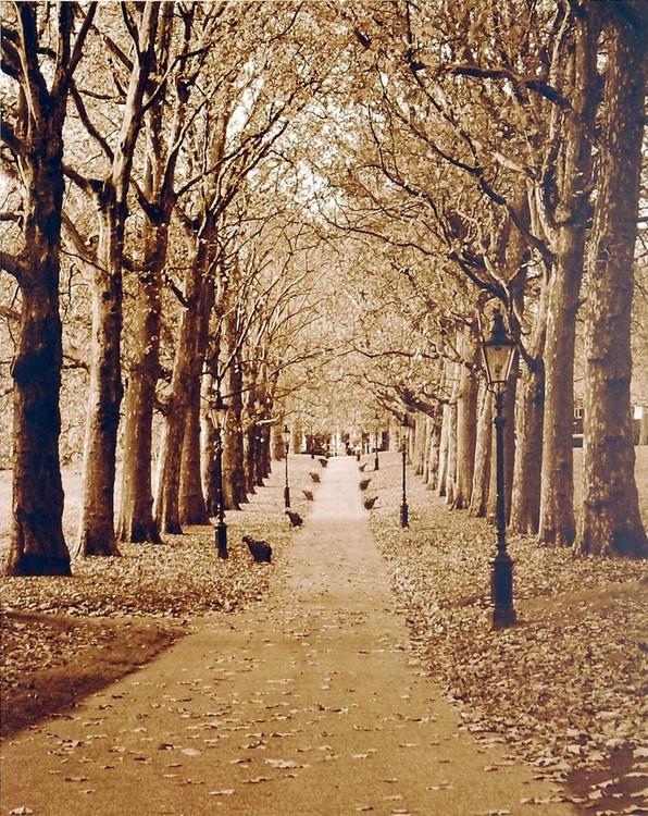 Autumn Stroll II Kunsttryk