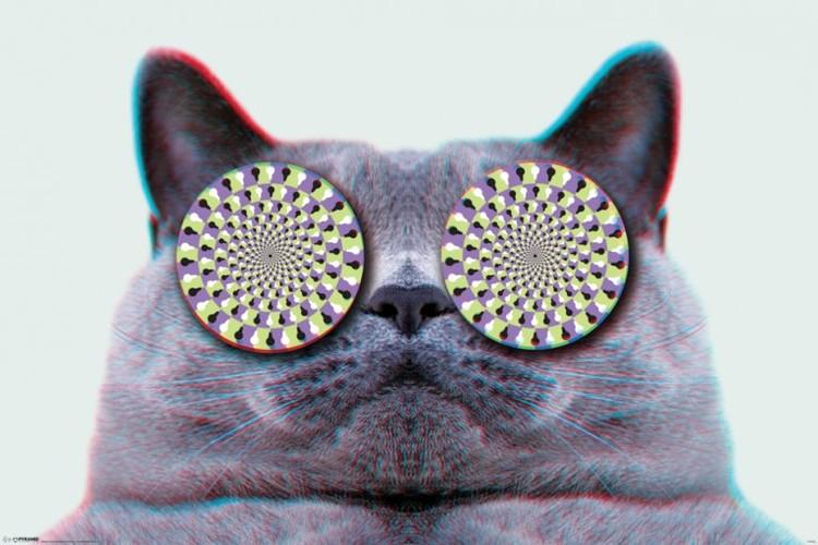 Cats eyes Plakat