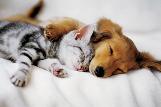 Cuddles Plakat