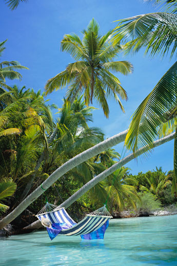 Hammock - tropical beach Plakat
