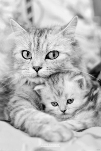 Keith Kimberlin - cat and kitty Plakat