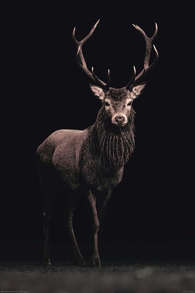 Kings of Nature - Hirsch Plakat