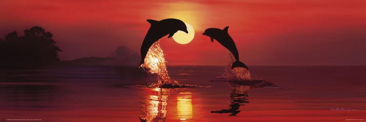 Lassen - dolphin dawn Plakat
