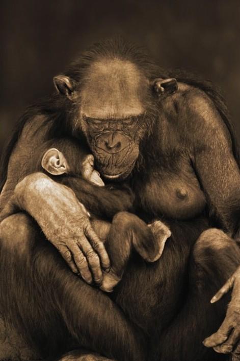 Motherhood Plakat
