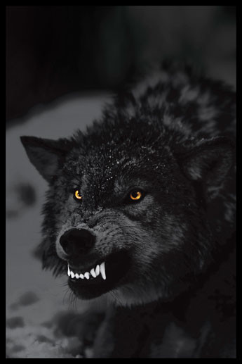 Prowling wolf Plakat