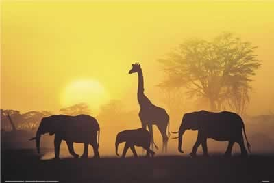 Sunset in Kenia Plakat