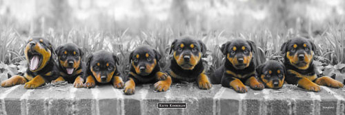 Keith Kimberlin - puppies Poster