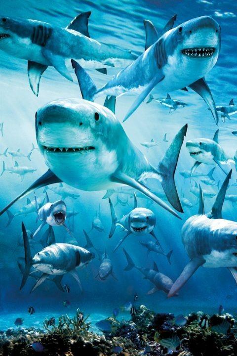 Shark - infested Poster
