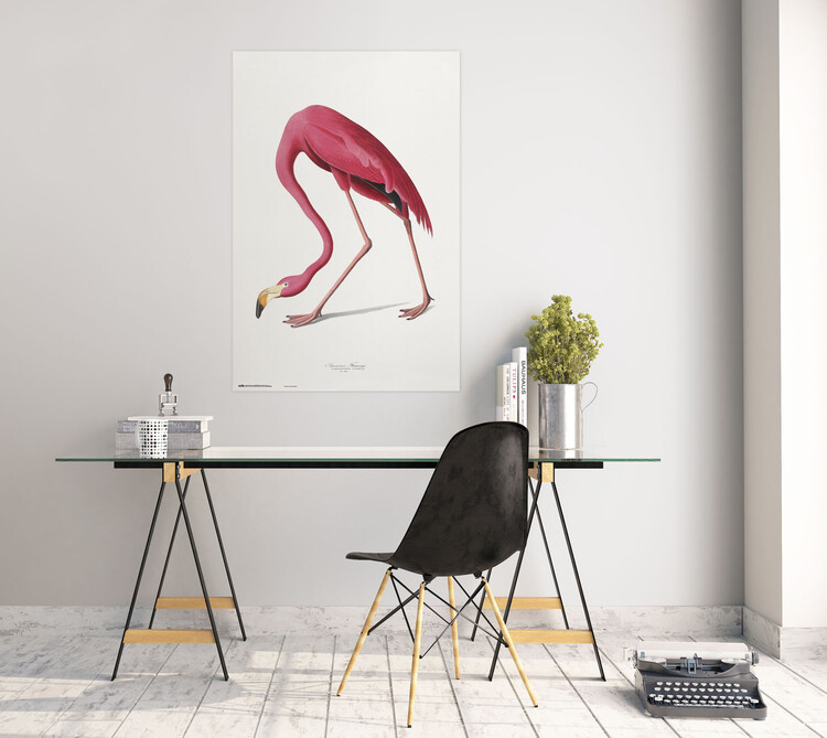 Plakát American Flamingo