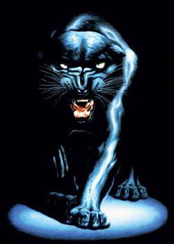 Black panther Plakát