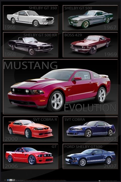 Ford Shelby Mustang - evolution Plakát