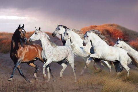 Horses/dusk - bob langrish Plakát