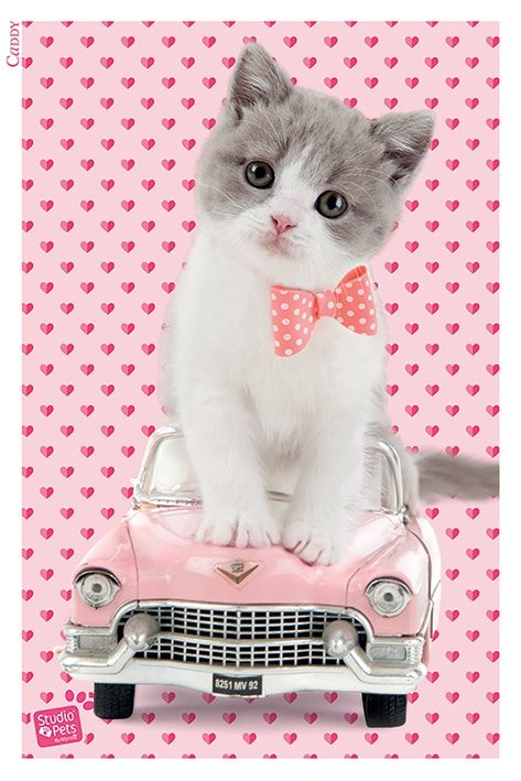 Studio Pets - Caddy Plakát