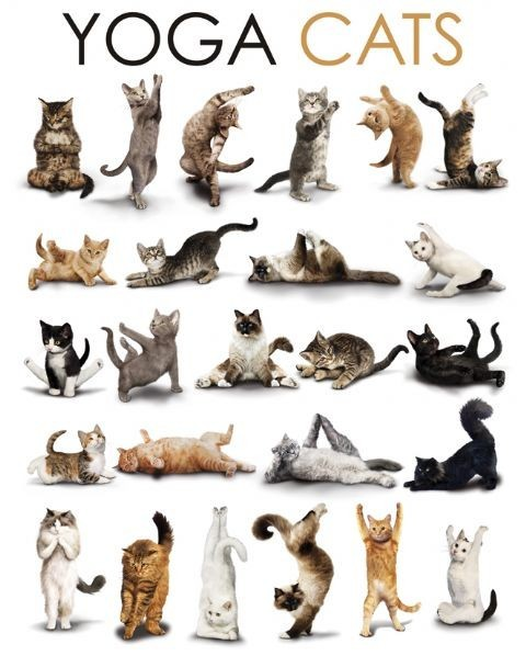 YOGA CATS - compilation Plakát