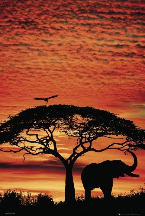 Africa Sunset - slon  plakát, obraz