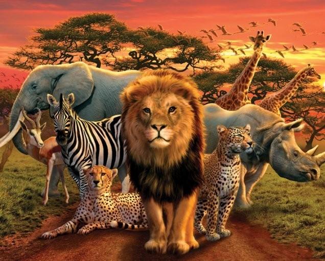 Plakát African kingdom