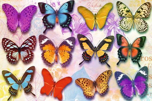 Plakát Butterflies