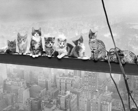 Plakát Cats on Girder