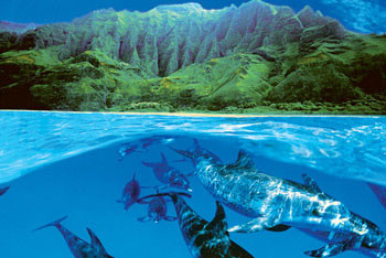 Plakat Dolphin island