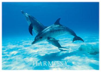 Plakat Harmony - dophins