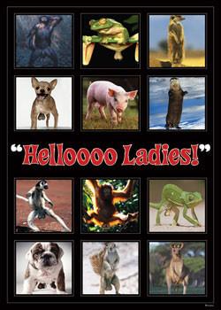 Plakat Hellooo ladies ! - montage
