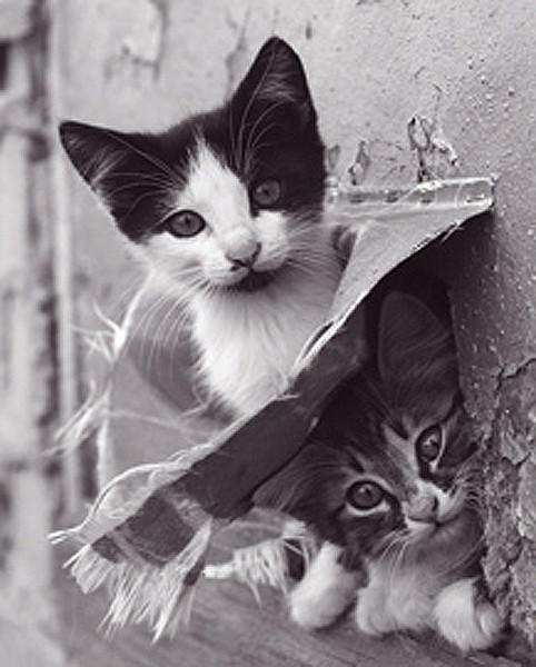 Plakát Kotě - dvě