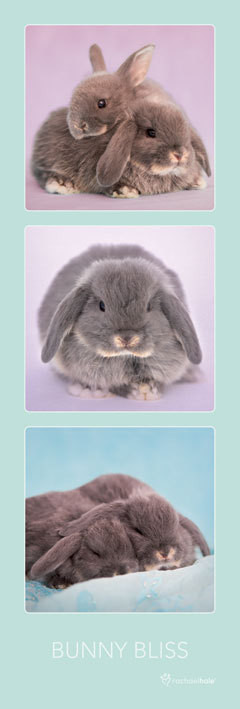 Plakát Rachael Hale - bunny bliss