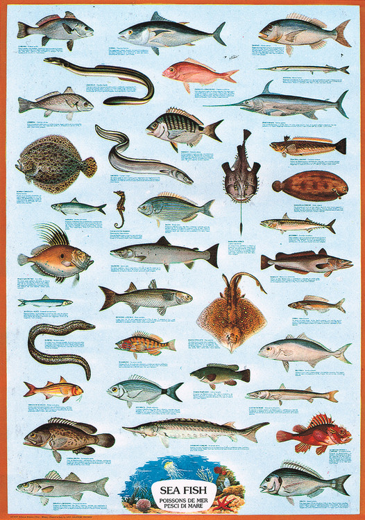 Plakat Sea fish