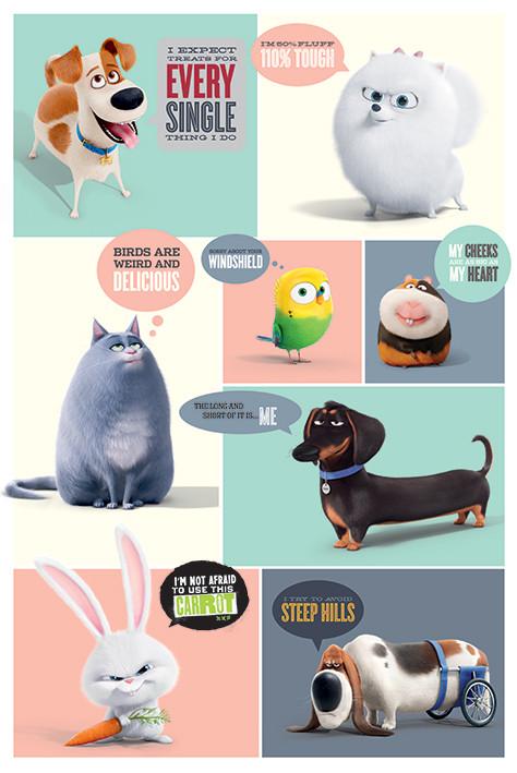 Plakat Sekretne życie zwierzaków domowych - Boxes