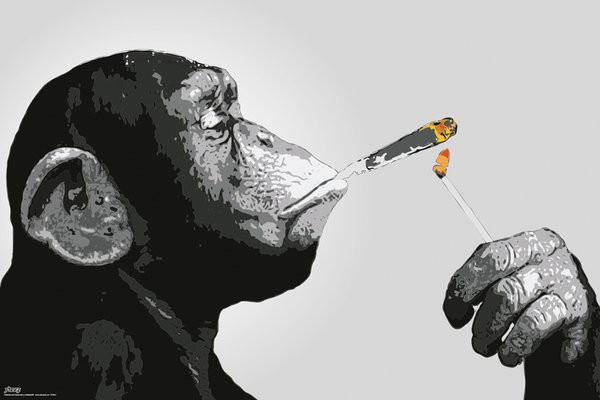 Plakat Steez - Małpy Smoking